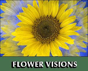 Impressionist Flower photo gallery