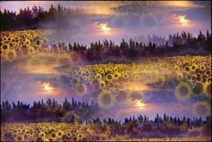 Impressionist Flower photographs