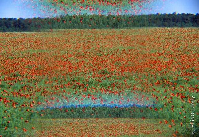 Impressionist Flower photographs by Elliott Landy